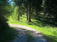 ruhe im wald Mountain View, Den, Wanderlust, Country Roads, Earth, Landscape, World, Outdoor, The World