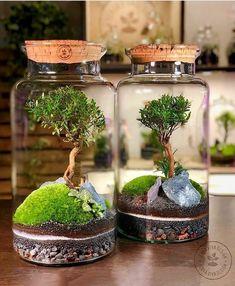 Plant In Glass, Bonsai, Plants, Beautiful, Instagram, Terrariums, Home Decor, Olinda, Garden