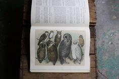 The Birds of North America by littlebyrdvintage on Etsy, $60.00