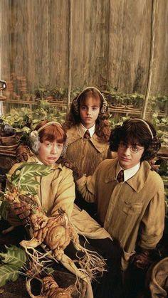 Harry Potter & the chamber of secrets Estilo Harry Potter, Mundo Harry Potter, Theme Harry Potter, Harry Potter Tumblr, Harry Potter Hermione, Harry Potter Pictures, Harry Potter Universal, Harry Potter Fandom, Harry Potter Characters