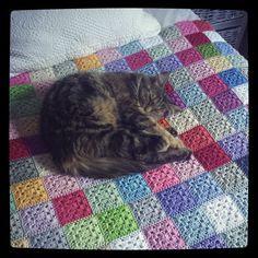 hookybren - kitty on #crochet blanket