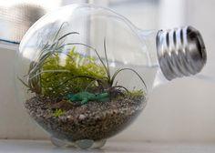 Crea un terrario reutilizando ampolletas - VeoVerde