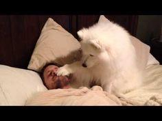 ¿Alguna vez te ha despertado así tu perro?