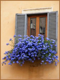 Rome, Italy. I love the shutters, the wood grain window frames and the gorgeous flower textures combined.