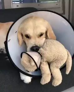 This is Barley, he's feeling a bit sad about his new look so he has a matching lampshade for his toy Cute Funny Animals, Cute Baby Animals, Funny Cute, Funny Dogs, Animals And Pets, Cute Puppies, Cute Dogs, Dogs And Puppies, Doggies