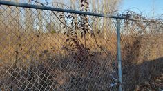 Fence on the north side of the Howard Watson Nature Trail behind Michael Snow Court, Heritage Park subdivision, Sarnia, Ontario.  November 25, 2015.