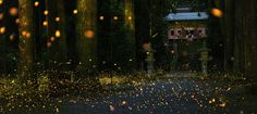 Fireflies places in Japan