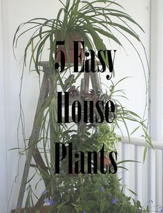 5 Easy House Plants