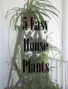 5 Easy House Plants