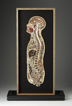 Lisa Nilsson creates breathtaking anatomical cross-sections from paper. Exhibit at New York City's Pavel Zoubok Gallery.