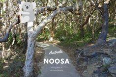 Notre voyage en Australie : de Noosa à l'Australia zoo