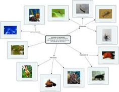 animals vertebrats - Cerca amb Google