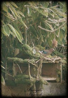 geai des chênes . chant oiseau geai .  geai bleu . cabane oiseaux . carnac . boutiques vêtements carnac