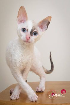 """** """" Afters a cat show recentlys, me stayed at a reallys old hotel. Dey slid a Wake Up note unders de door."""""""