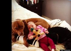 Your Pit Bulls: Robbybad: Vicious pitbull has my baby cornered. No wait, she's using her as a recliner never mind.