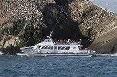 Armor-Navigation : vous propose plusieurs croisières inoubliables ainsi des escapades en mer pour les passionnés de pêche.| BreizhAway Evasion