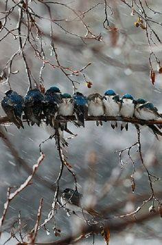 Birds. BuzzFeed.