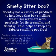 Smelly Litter Box? Scentsy's got you covered! #scentsbykris