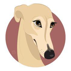 Galgo / greyhound.