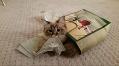 Koshka making sure there's nothing else in the bag.
