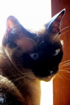 Luna my cat by millie coquis