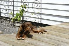 Axl enjoying the sun. His favorite thing
