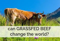 Grassfed beef means not only valuable nutrition for human beings, but also a balanced ecosystem with rich and fertile soil. Nutrition Program, Health And Nutrition, Health And Wellness, Health Foods, Himalayan Salt Benefits, Liver Recipes, 9 Month Old Baby, Healthy Eating Guidelines, Take Care Of Your Body