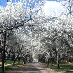Spring in Westwood, Ohio.  I lived in Westwood, during my mid-twenties.