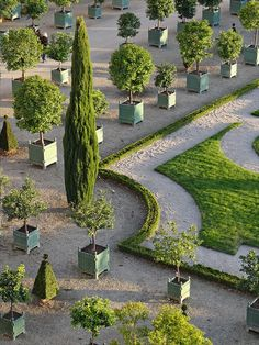 Le parterre de l'Orangerie du château de Versailles