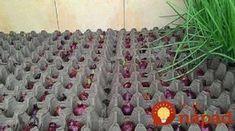Skvelý spôsob, ako celoročne pestovať cibuľu v byte Fruit Garden, Garden Seeds, Vegetable Garden Design, Garden Tools, Summer House Garden, Hanging Mason Jars, Farm Gardens, Easy Garden, Outdoor Plants