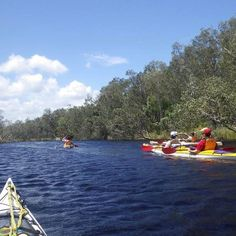 Kayaking on Everglades, Queensland, Australia