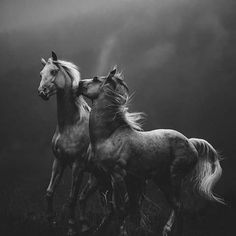 black and white actress photographs Most Beautiful Horses, All The Pretty Horses, Equine Photography, Animal Photography, Zebras, Beautiful Creatures, Animals Beautiful, Fotografia Pb, Animals And Pets