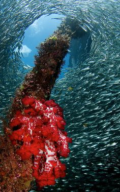 """Raja Ampat Underwater"" - Papua - Indonesia - This is cool! Indonesia is Beautiful :)"