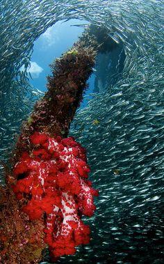 """""""Raja Ampat Underwater,"""" Papua, Indonesia"""