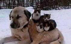 E nós humanos, brigamos e matamos os mesmo da nossa espécie. Já os animais, ah os animais.... muito a aprender com eles!