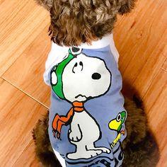 . .  今日の福ちゃん🐶  #トイプードル #福ちゃん  #スヌーピー #男の背中 #dogfashion #snoopy #愛犬 #toypoodle