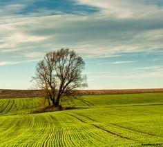 Fields of Vysočina, Czech Republic by Miroslav Havelka on 500px