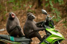 Самые смешные фотографии животных 2017 года