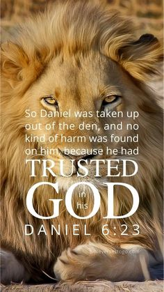 Lion Bible Verse, Bible Verses Quotes, Prayer Quotes, Scripture Wallpaper, Bible Verse Wallpaper, Bible Verse Background, Daniel And The Lions, Lion Quotes, Inspirational Quotes About Success
