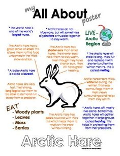 My All About Arctic Hare Book - (Arctic/Polar Animals) Arctic Hare, Arctic Wolf, Arctic Habitat, Operation Arctic, Artic Animals, Snowshoe Hare, Animal Activities, Animal Books, Animal Facts