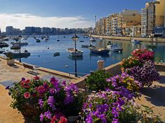 St. Julian's Flowers    Flowers on the seashore in St. Julian's, Malta Island off coast of Italy & north of Tunisia.