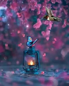 Beautiful Love Pictures, Beautiful Photos Of Nature, Beautiful Fantasy Art, Beautiful Nature Wallpaper, Beautiful Gif, Nature Pictures, Background Hd Wallpaper, Photo Background Images, Fairy Photography