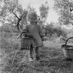 Little girl, daughter of a woman who was an olives-gatherer, follows-up of the Mother in the workplace: an olive grove in the territory of Gioia Tauro (RC) in Calabria (Italy). Photograph by Ando Gilardi, about 1955