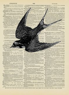 two of my favourite things together...beautiful swallow illustration and text.