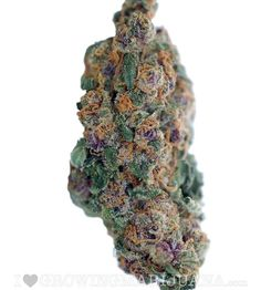 Blueberry (fem)