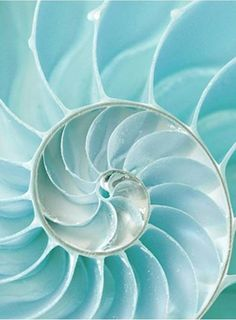 Nautilus shell - the Golden Ratio in Nature. Bleu Turquoise, Aqua Blue, Cobalt Blue, The Magic Faraway Tree, Nautilus Shell, All Nature, Patterns In Nature, Blue Aesthetic, Op Art