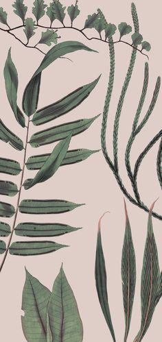 Woodland, Subtle and elegant yet bold print design in bottle green vegetation against a number of suitable base colors in large repeat size, perfectly suitable Bold Prints, Earth Tones, Surface Design, Woodland, Print Design, Print Patterns, Plant Leaves, Minimal, Wallpapers