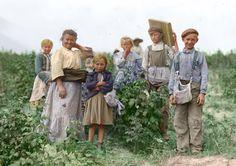 Polish immigrants working on the farm, 1909.