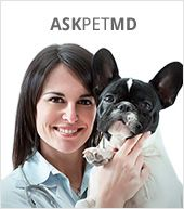 Glucosamine for Rocko:  Remedies for Arthritis in Dogs: Glucosamine, Chondroitin Sulfate, Steroids, and NSAIDs   petMD