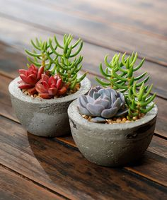 Look what I found on #zulily! Live Succulents & Concrete Planter - Set of Two #zulilyfinds